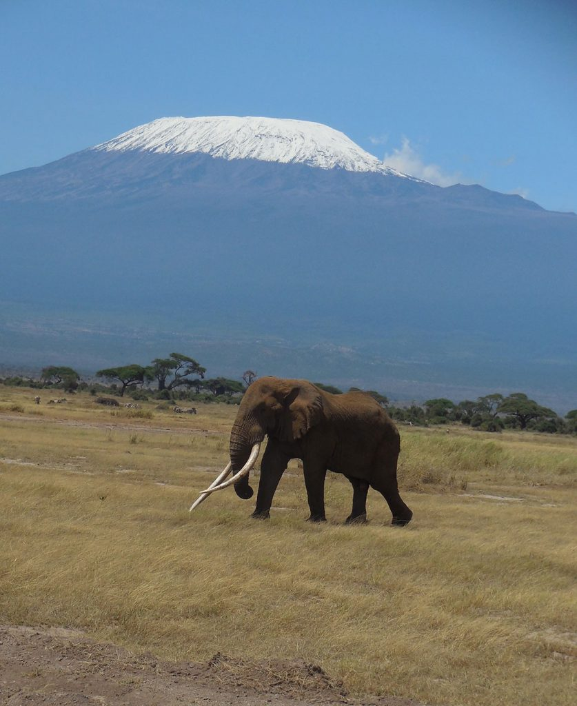 5e4696d144ca0 Why Kenya s ivory burning makes sense  worthmorealive historic ...